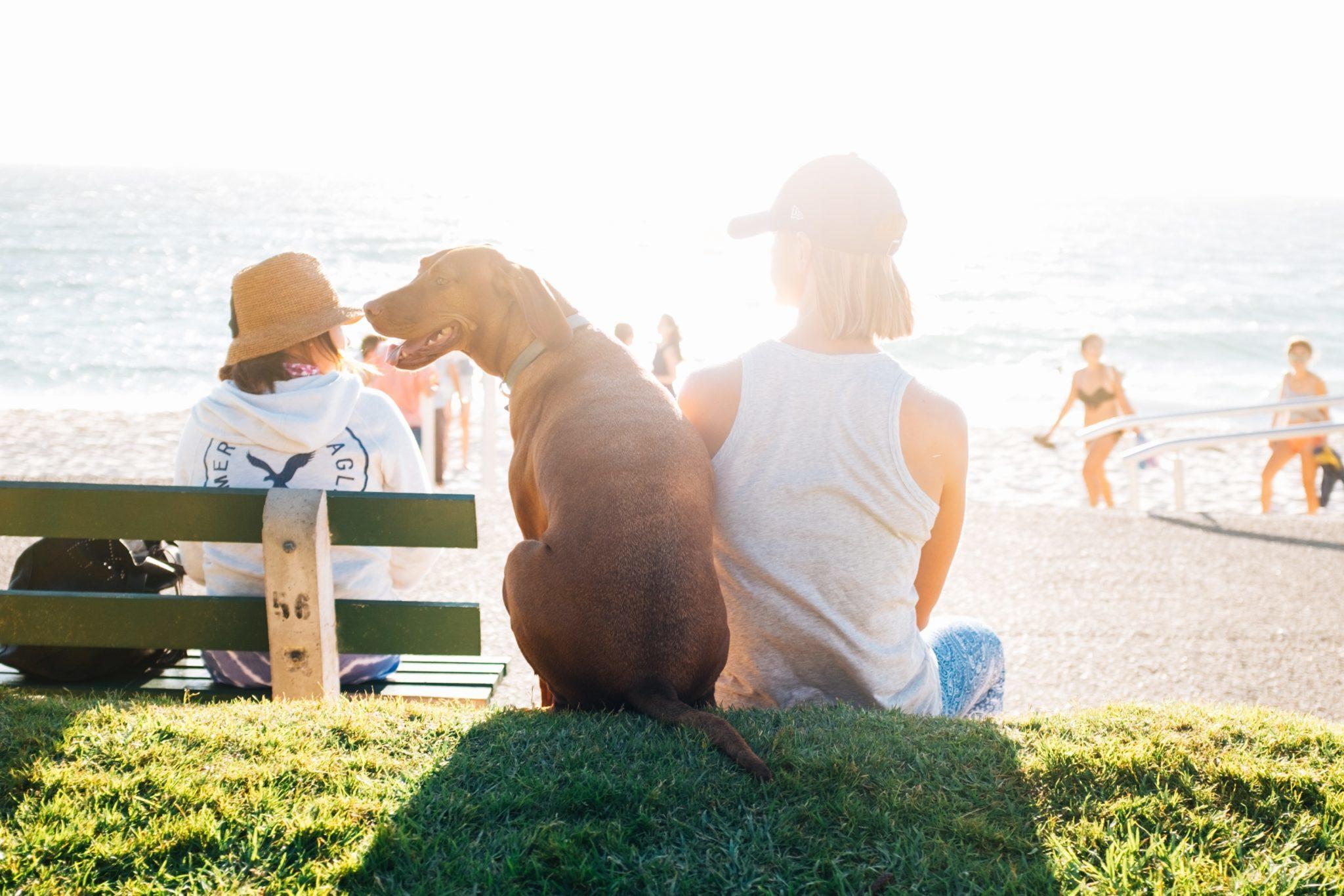Hond en baas op vakantie