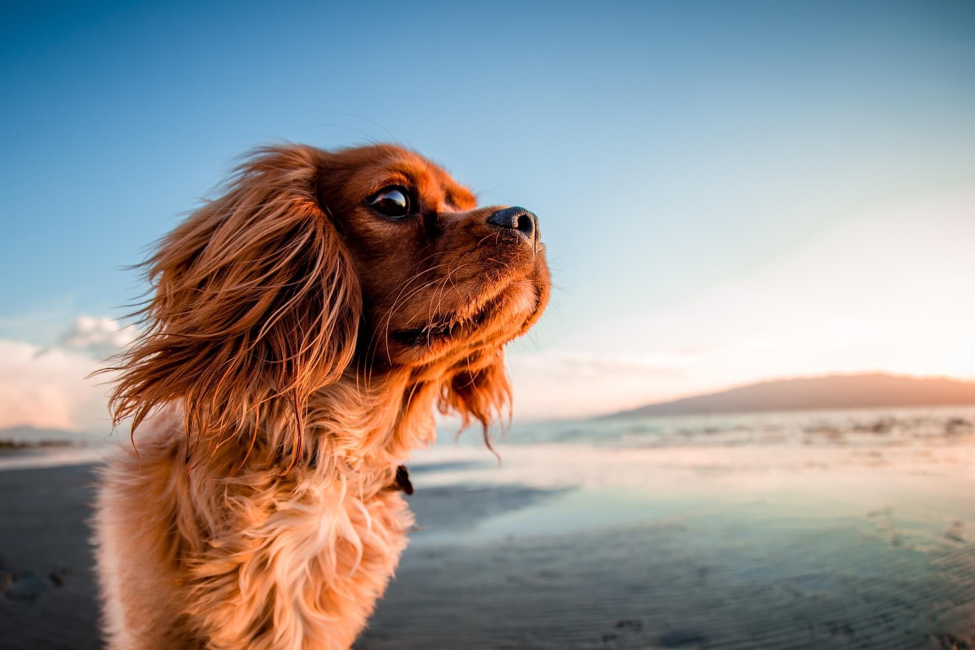 Tips om op vakantie te gaan met je hond